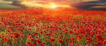 Purpose of Remembrance